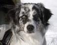 2006-04-02_vinnare_klass1_t