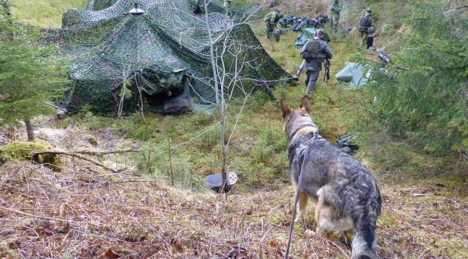Utbildning till Patrullhundsekipage under 2018.