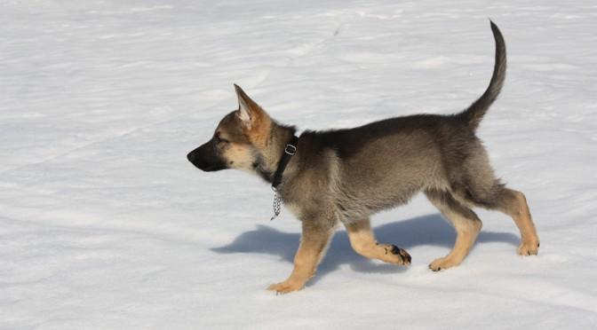 Valpkurs – det bästa sättet att starta sitt hundägande!
